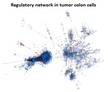 Large differences in global transcriptional regulatory programs of normal and tumor colon cells